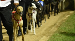 GRV VBIS Maiden Final Preview: Moreira to Give Rivals Plenty