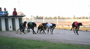 Shepparton Preview: Hatty Hard to Beat