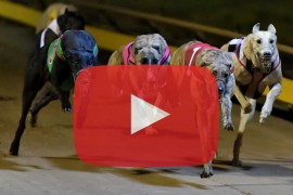 2018 Group 2 CKH Painting Shepparton Cup preview