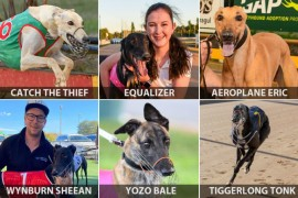 All-stars align for Shepparton Cup heats