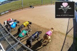 Pink Diamond series – get your team ready